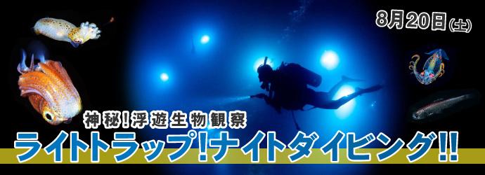 神秘!浮遊生物観察!ライトトラップ・ダイビング!