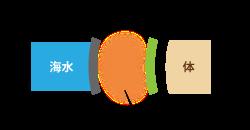 海中-ドライスーツ-空気-インナー-体