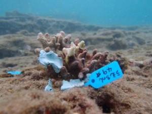 ミスオーシャン、サンゴ救出大作戦!