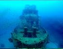 沈船で見られる生き物・景色