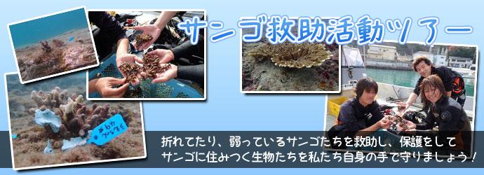 サンゴ救助活動ツアー。折れたり、弱っているサンゴたちを救助し、保護してサンゴに住み着く生き物たちを私達自身の手で守りましょう。